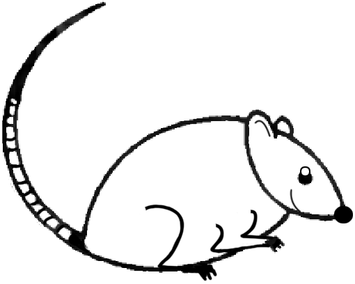 Drawing Lines With Mouse In Java : Big guide to drawing cartoon mice with basic shapes for