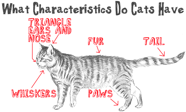 First - Lets Think About What Characteristics Real Cats All Have