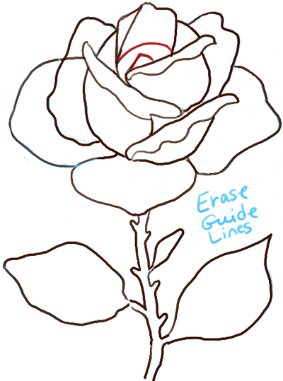 step08-drawing-of-a-rose