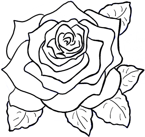 Drawing Lines Flowers : How to draw roses opening in full bloom step by