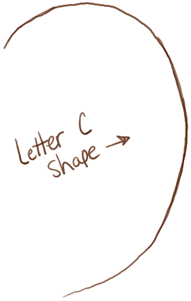 step01-ears