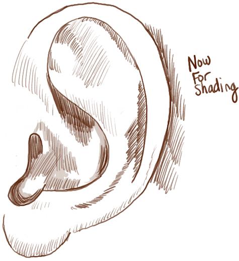 step04-ears