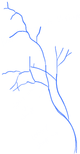 step04-how-to-draw-trees-oak-tree