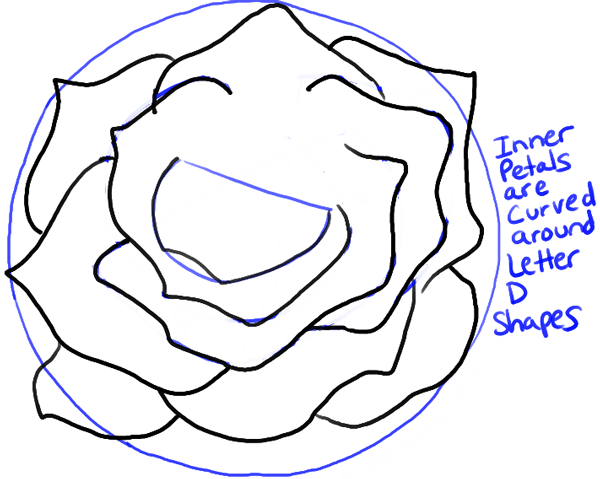 step07-rose-open-rose-blossoming