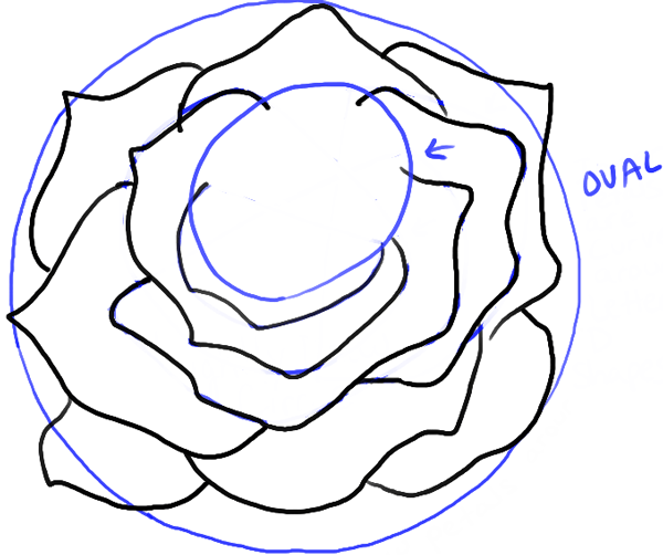 step08-rose-open-rose-blossoming