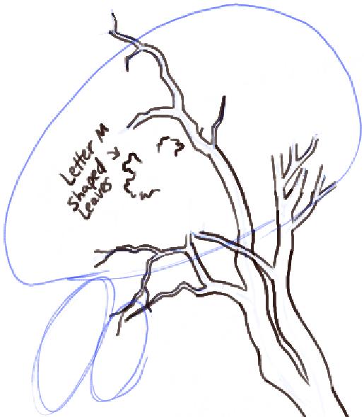 step09-how-to-draw-trees-oak-tree