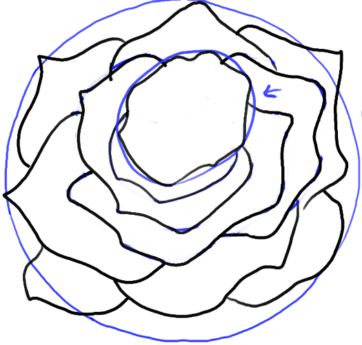 step09-rose-open-rose-blossoming