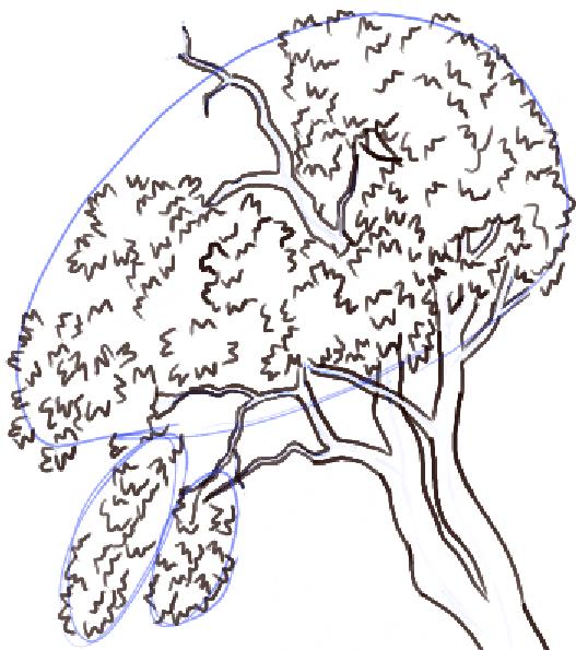 step10-how-to-draw-trees-oak-tree