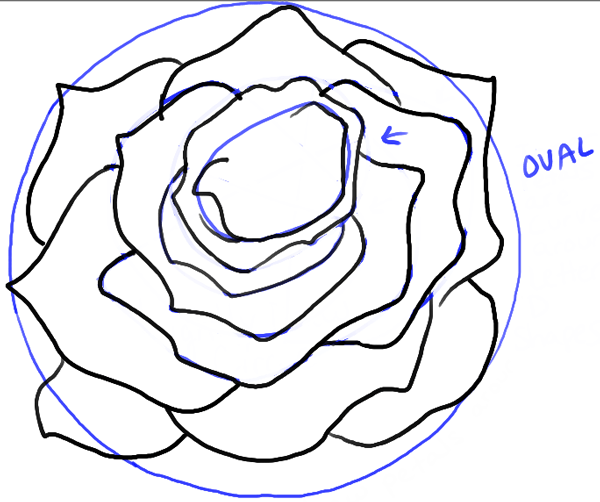 step11-rose-open-rose-blossoming