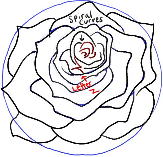 step13-rose-open-rose-blossoming
