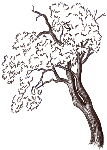 How To Draw A Oak Tree For Beginners Free Download Oasis Dl Co