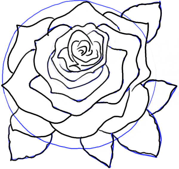 how to draw roses opening in full bloom step by step drawing