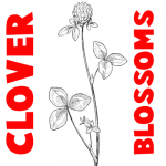 How to Draw Clover Blossoms in Easy Step by Step Drawing Tutorial