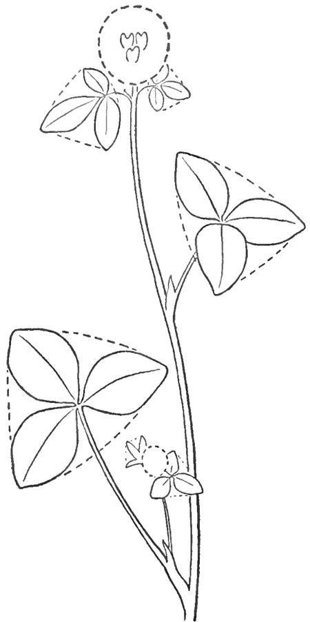 step-04-clover-blossoms