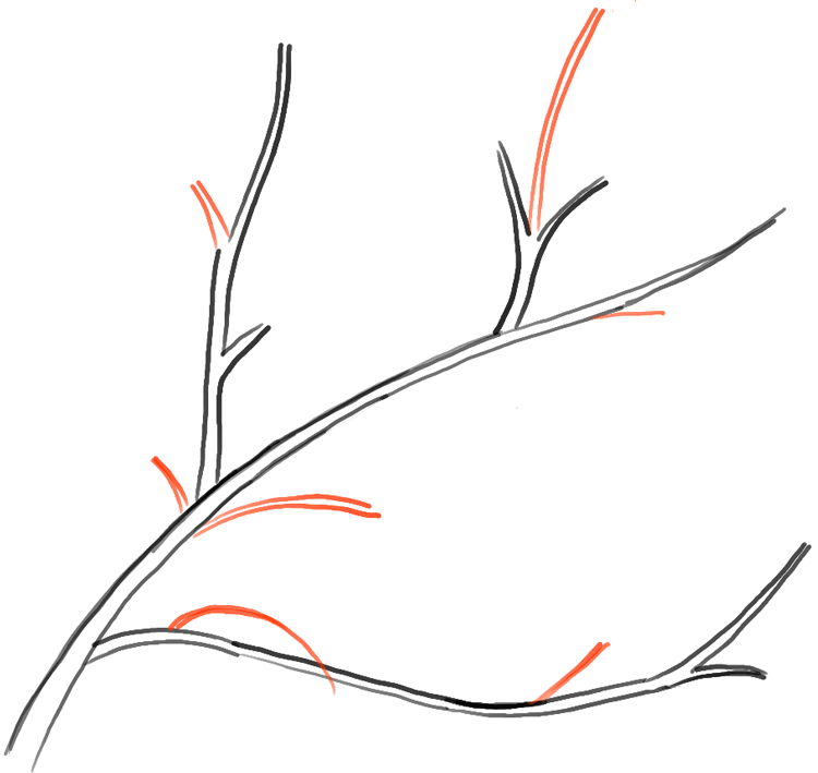 How to Draw Tree Branches Full of Leaves Drawing Tutorial ...