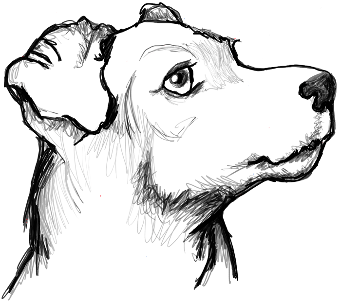 Finished drawing of terriers face