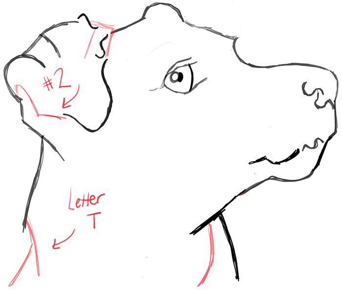 Line Drawing Of A Dog S Face : How to draw a terrier s face dog with easy steps