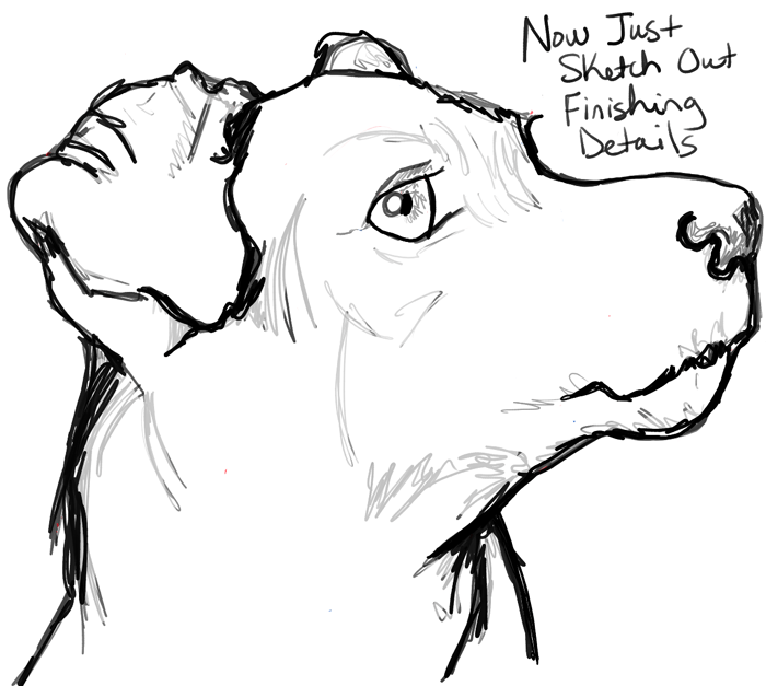 Step10 howtodraw realistic terrier dog face