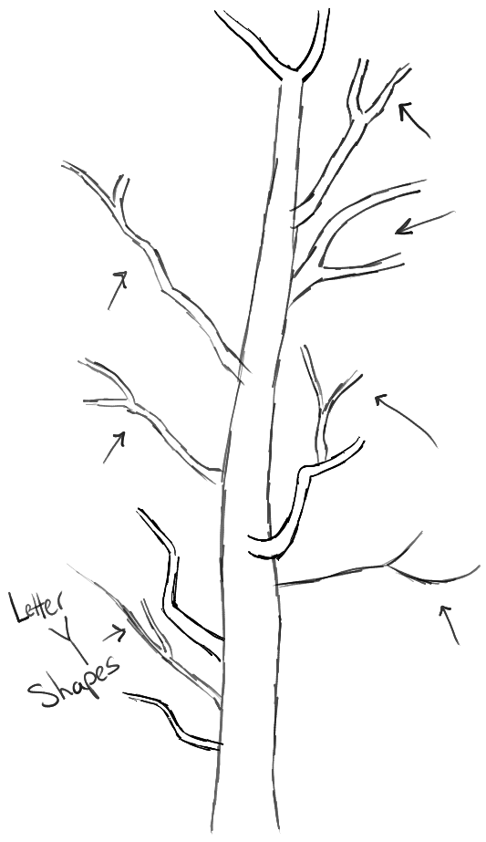 step03-learn-howtodraw-trees