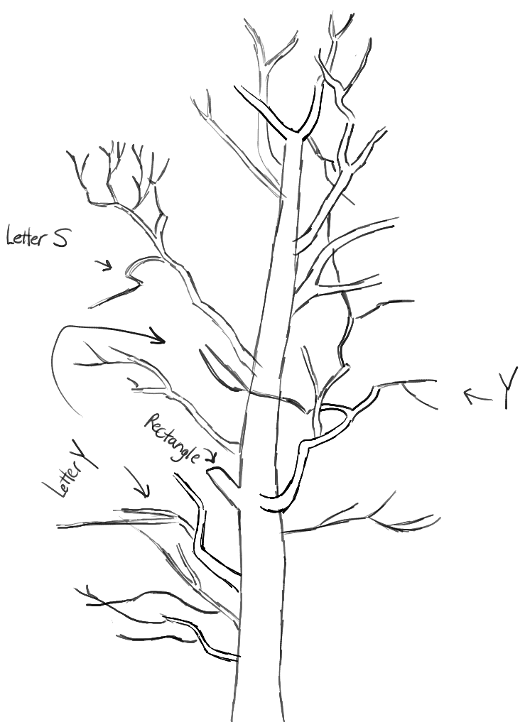 step05-learn-howtodraw-trees