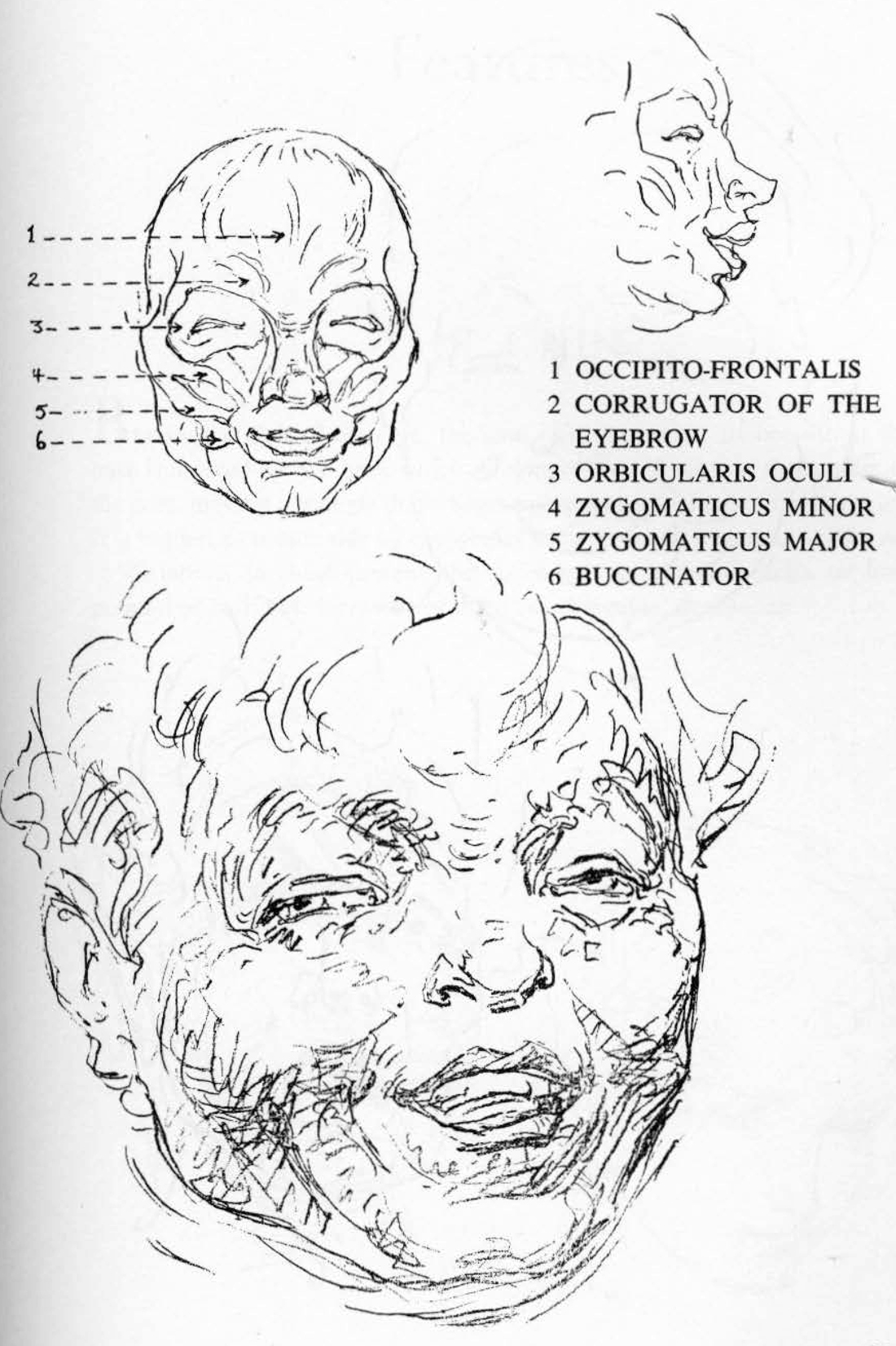 The variable expressions of the human face