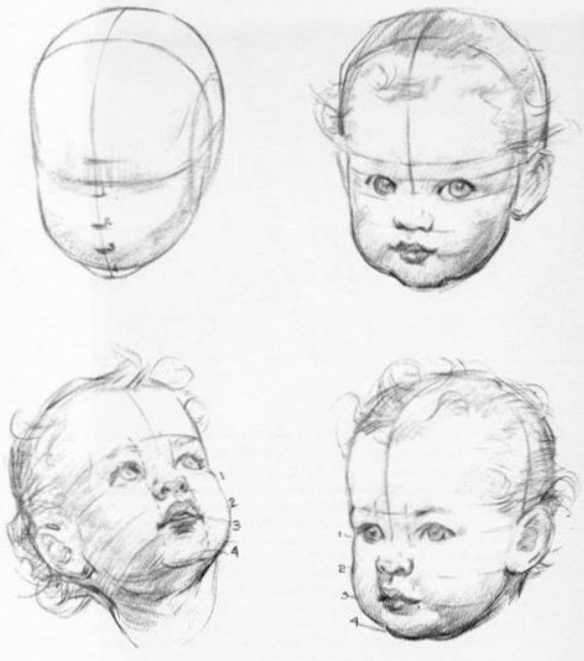 drawing the baby and toddler head in the correct proportions