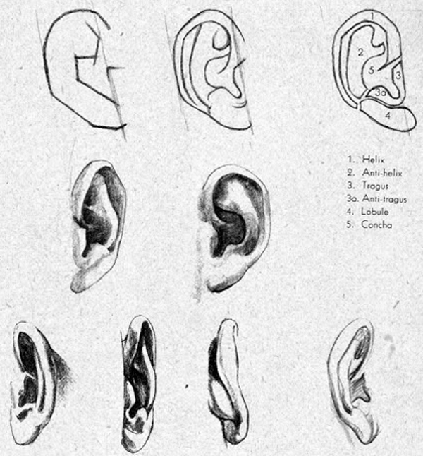Study on drawing ears take a look at how these ears have been drawn