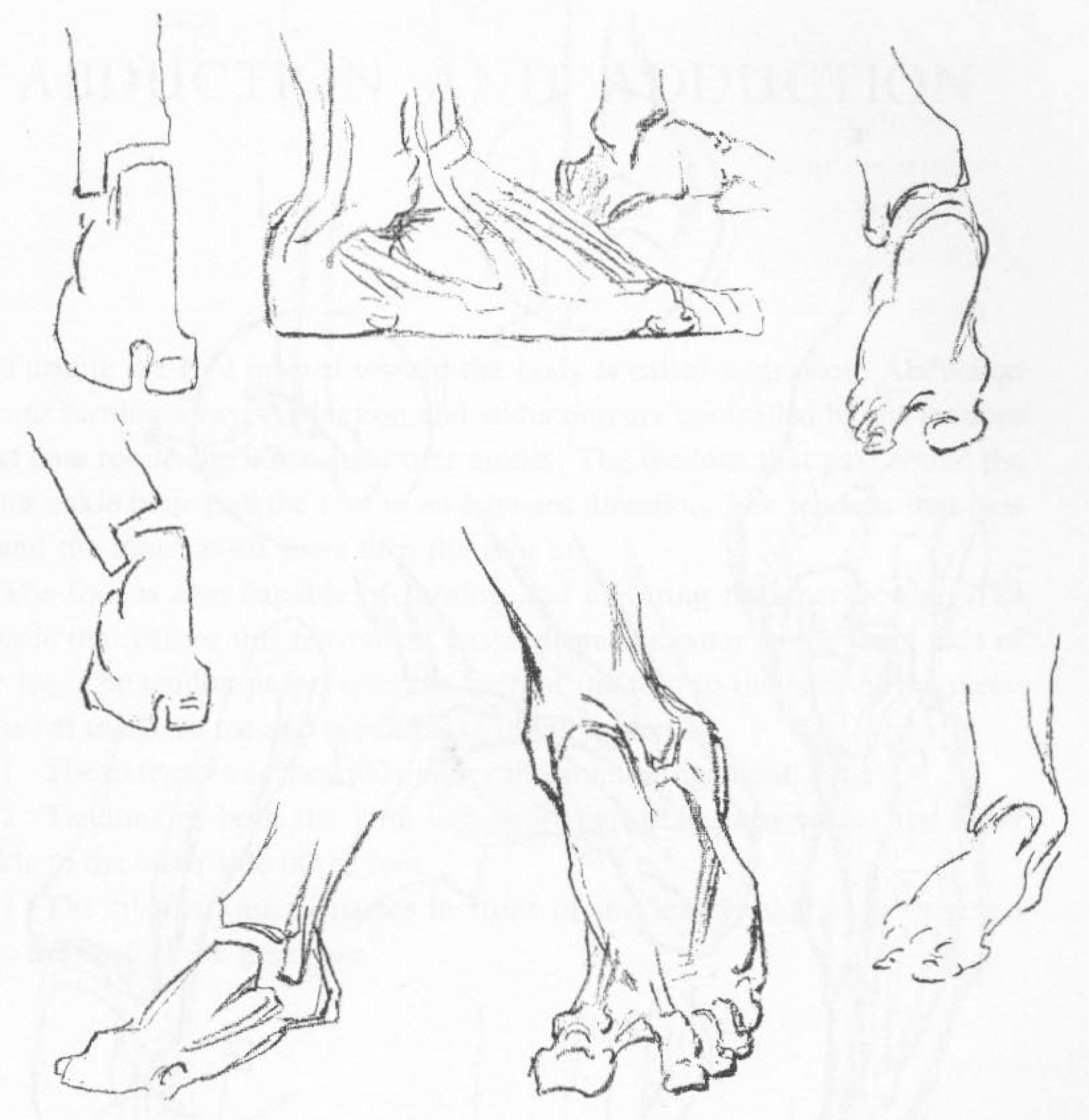drawing-feet-03 - Movement of the Foot