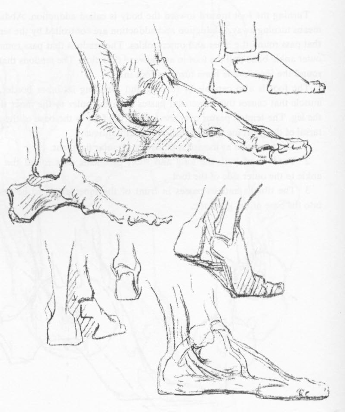 The Inner View of the Foot When Drawing it