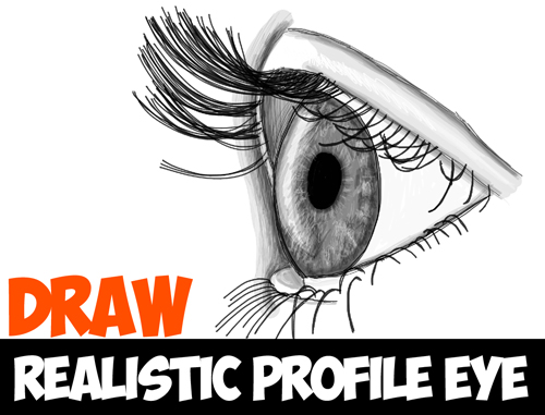 drawing realistic eyes from the profile face view