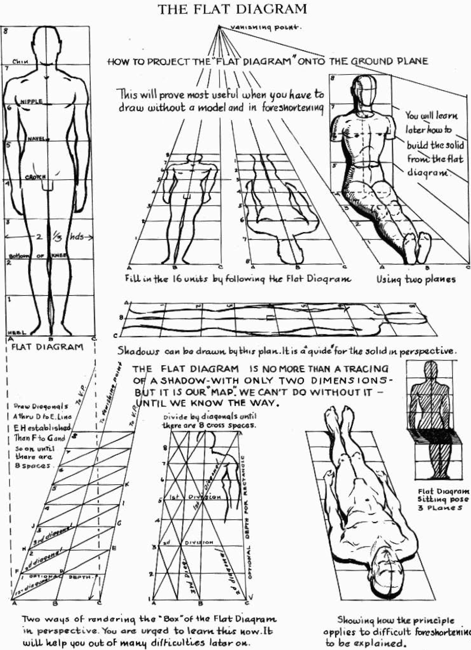 flat-diagram-human-body-perspective-drawing
