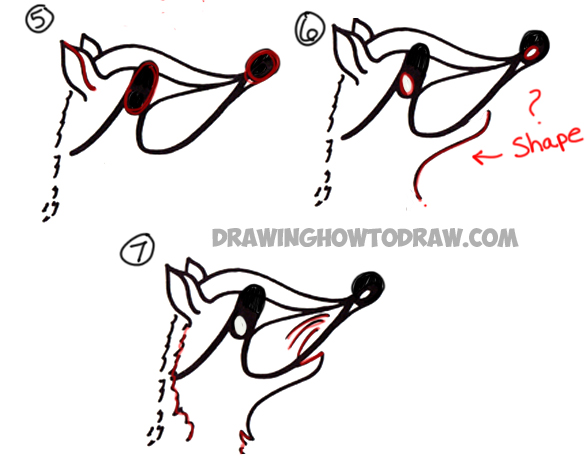 how to draw a cartoon raccoon step by step