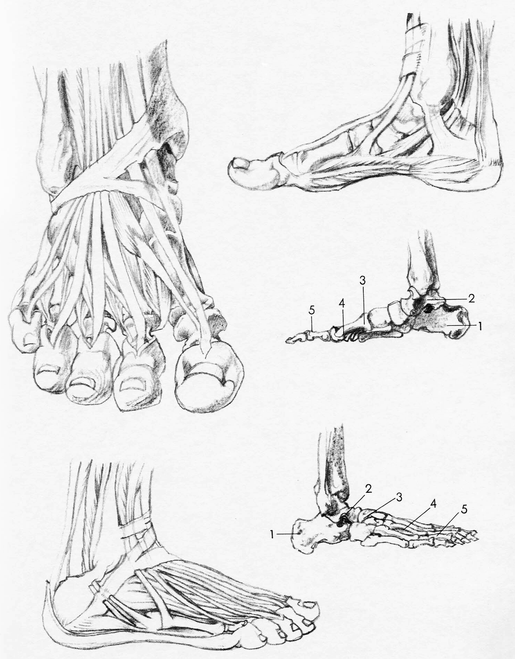 drawing-feet-reference-images
