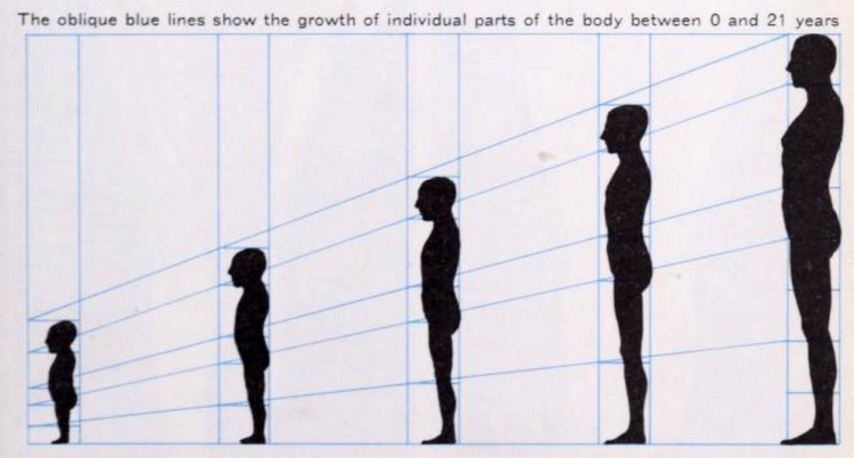 Fundamental differences between the mole, female, and child's body structures also exist alongside individual differences.