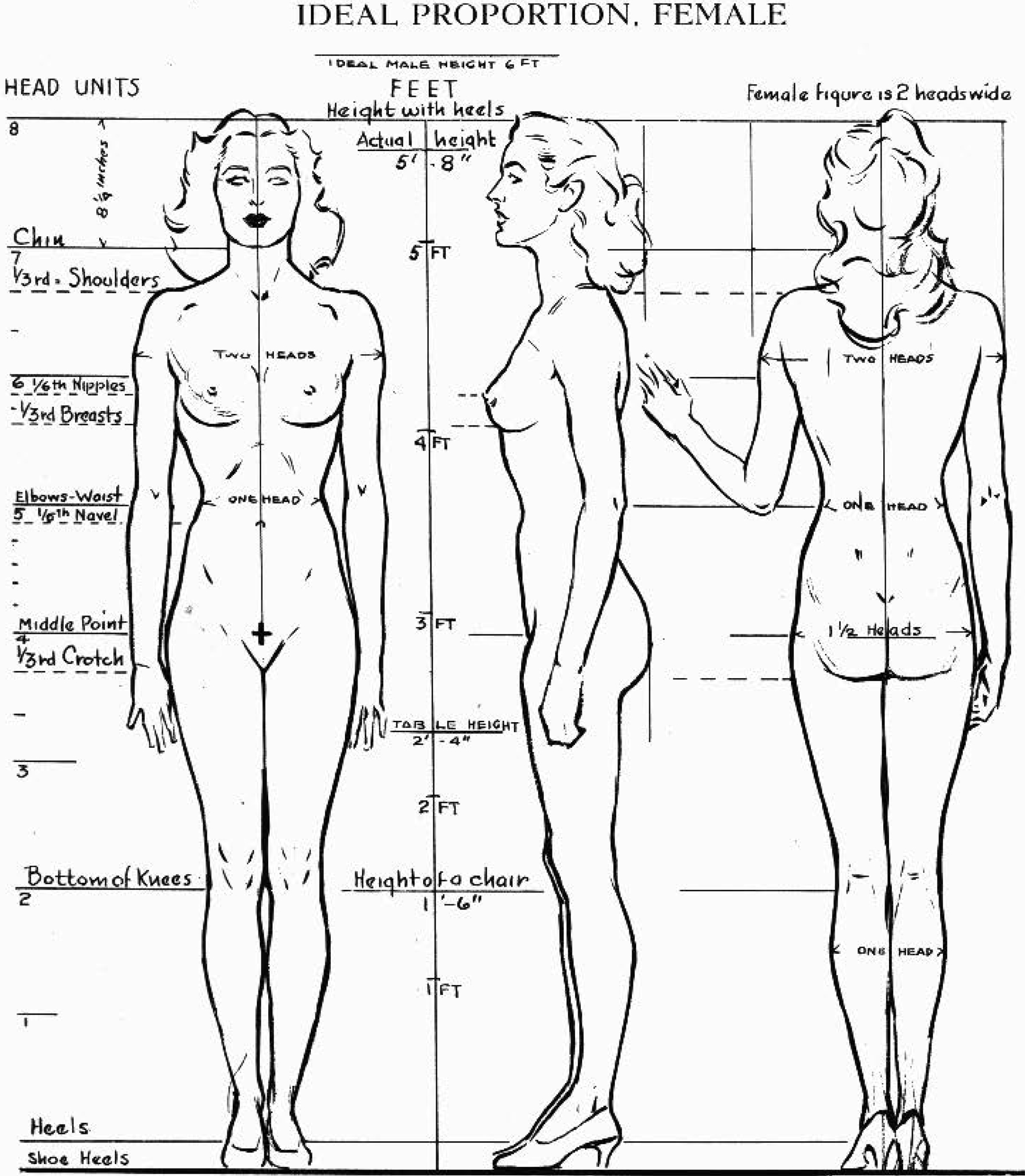 The female figure in the correct proportions