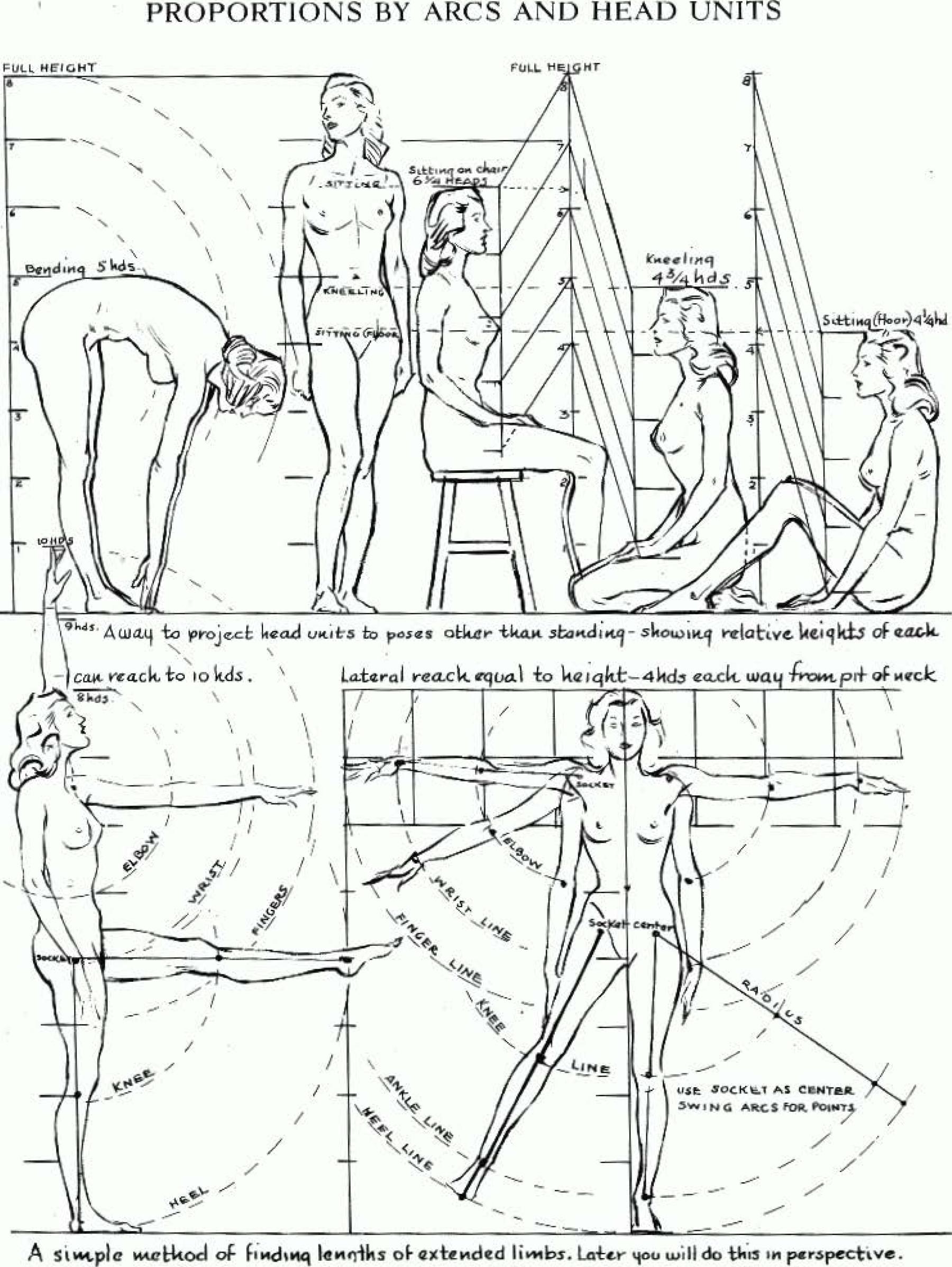 proportions-head-arcs