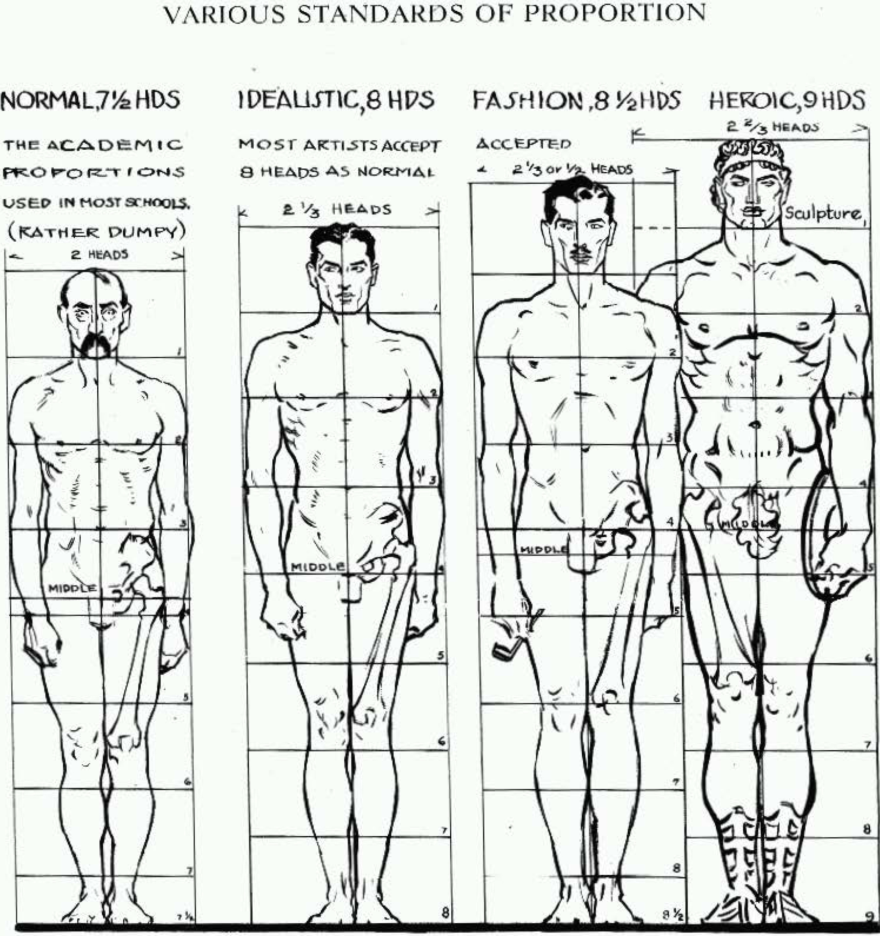 Proportions of the human figure how to draw the human for Size and proportion