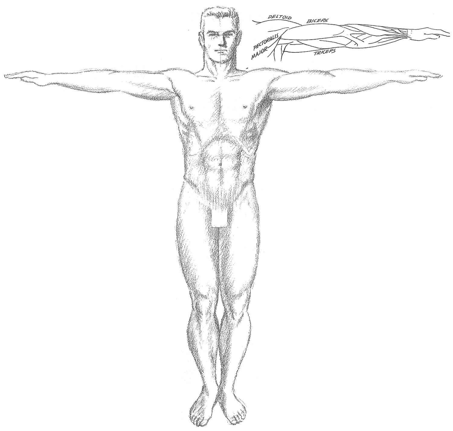 How to Draw the Human Torso and Chest - Body Figure Drawing Tutorial ...