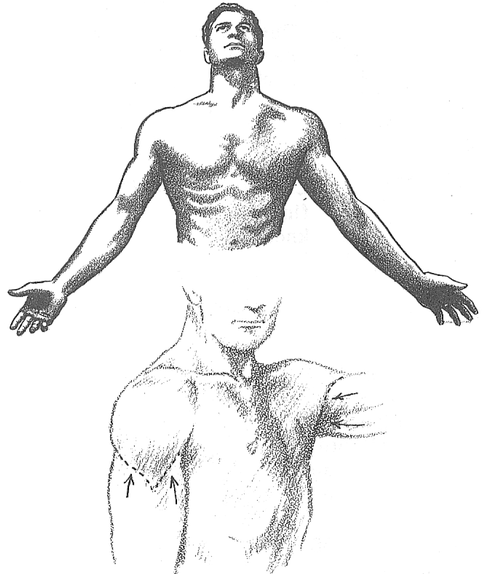 How to Draw the Human Torso and Chest - Body Figure Drawing