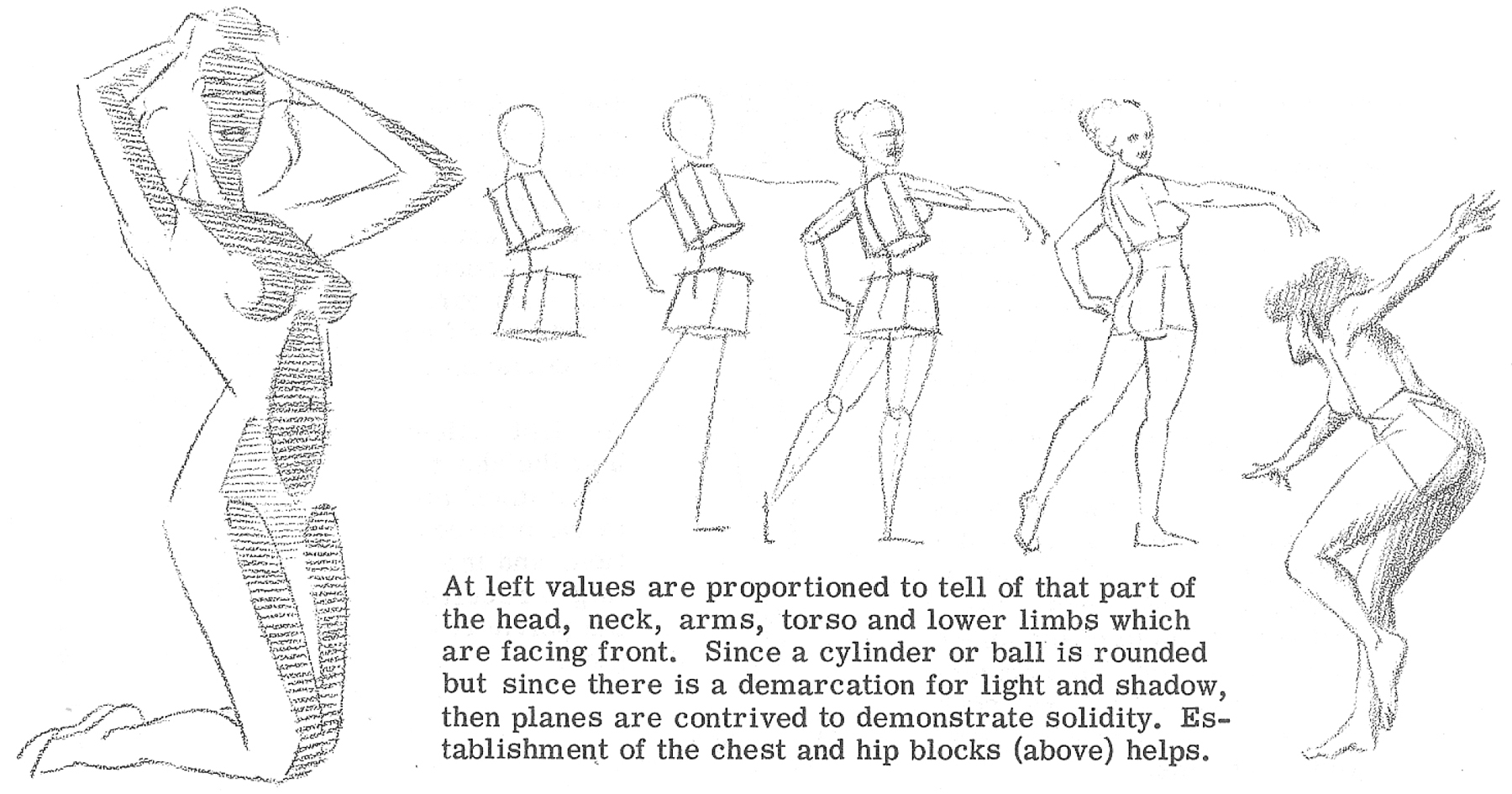 drawing-torsos-06-proportion of the figure