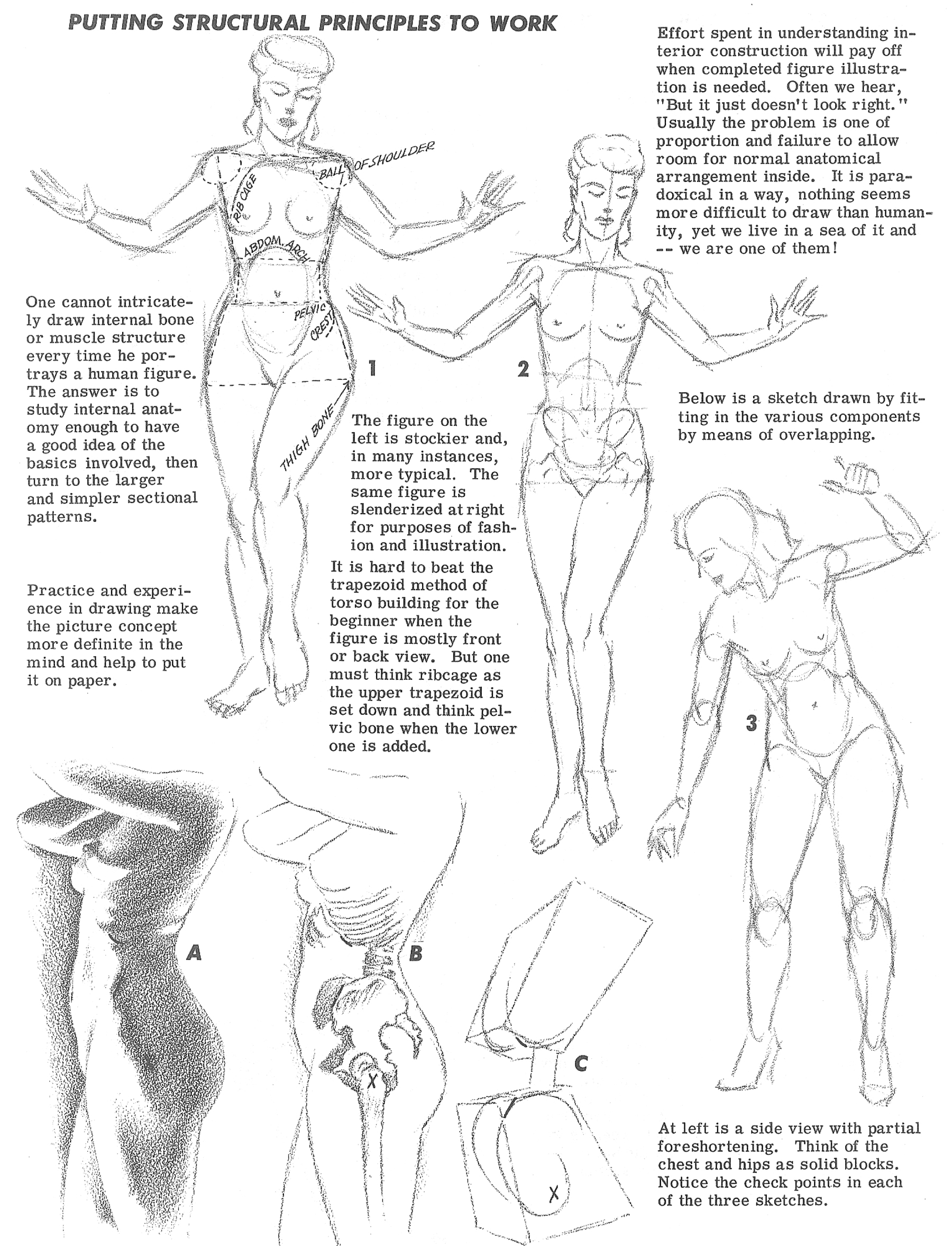 How To Draw The Human Torso And Chest Body Figure Drawing Tutorial