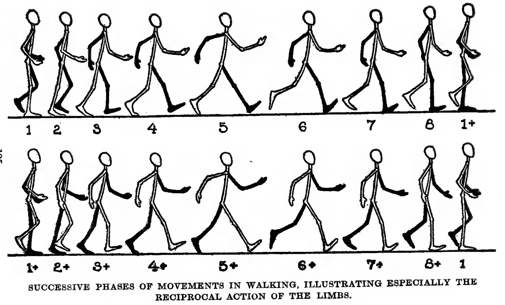How To Draw And Animate A Person Walking Or Running Huge Guide