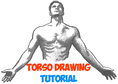 how to draw the human chest and torso