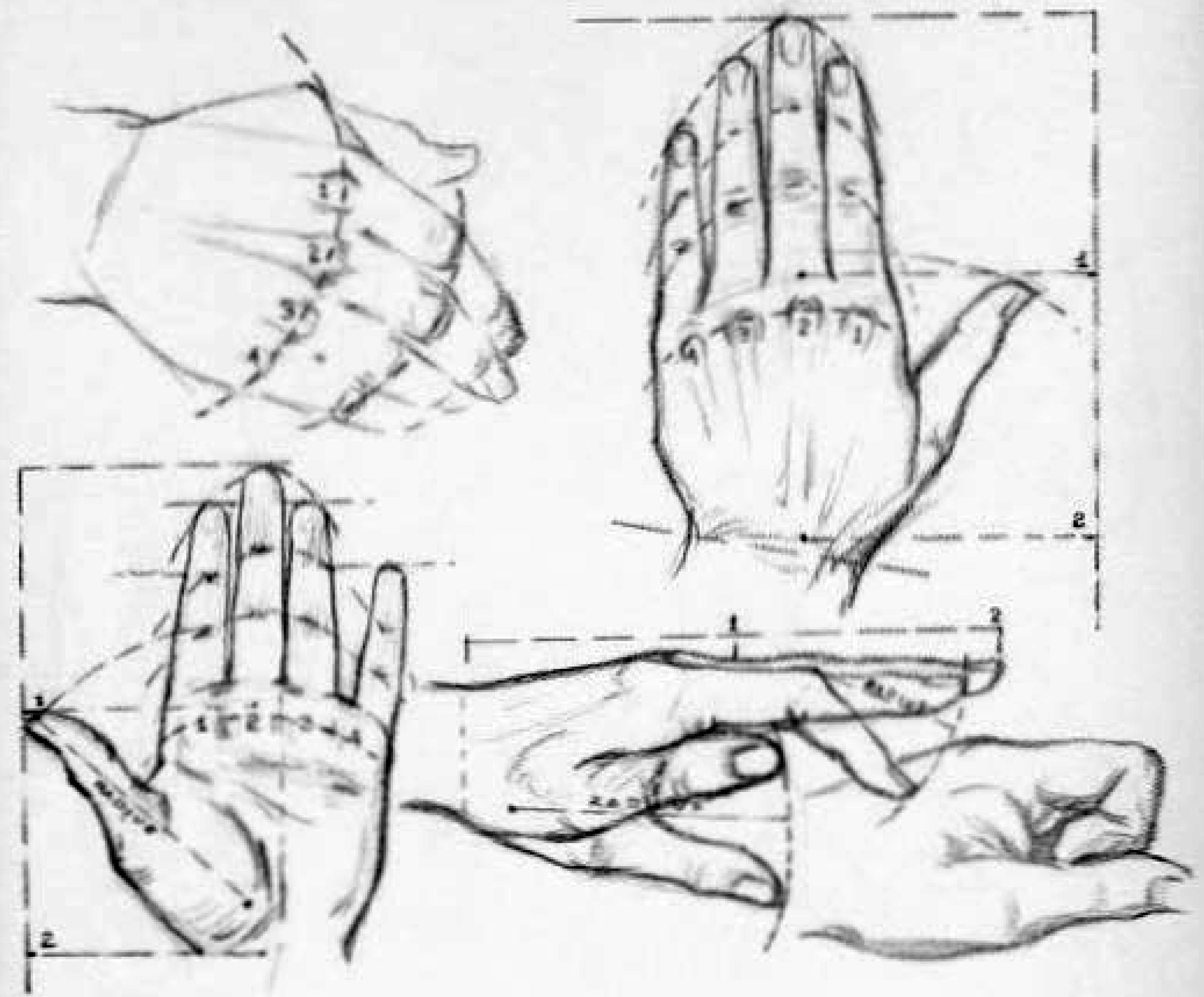 Drawing the proportions of the human hand - drawing proportional hands