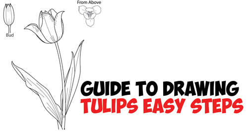 Learn How to Draw Tulips - Easy Step by Step Drawing Tutorial from Side, From Above and as Young Buds
