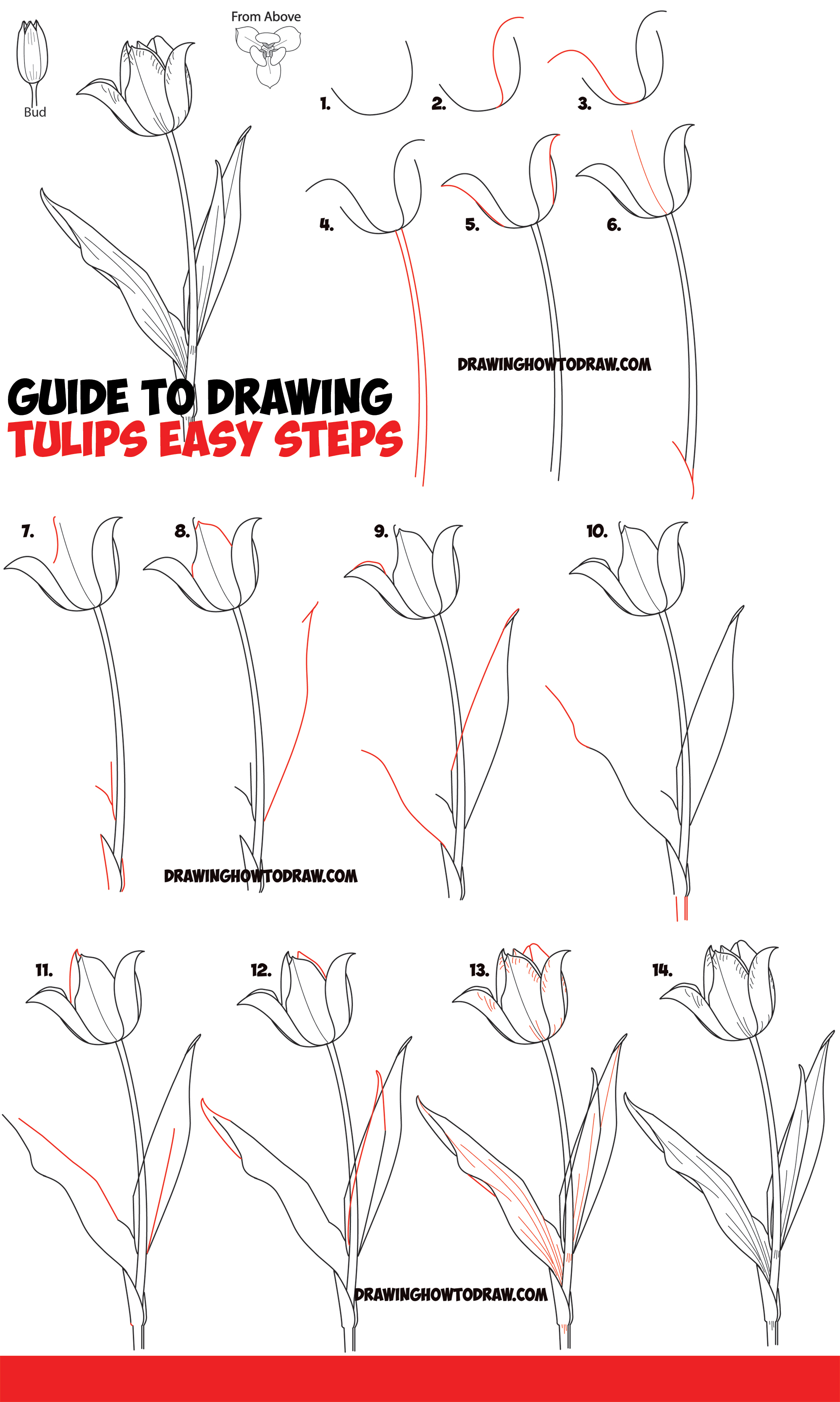 How to Draw Tulips - Guide to Drawing Tulips from Side, From Above and as Young Buds