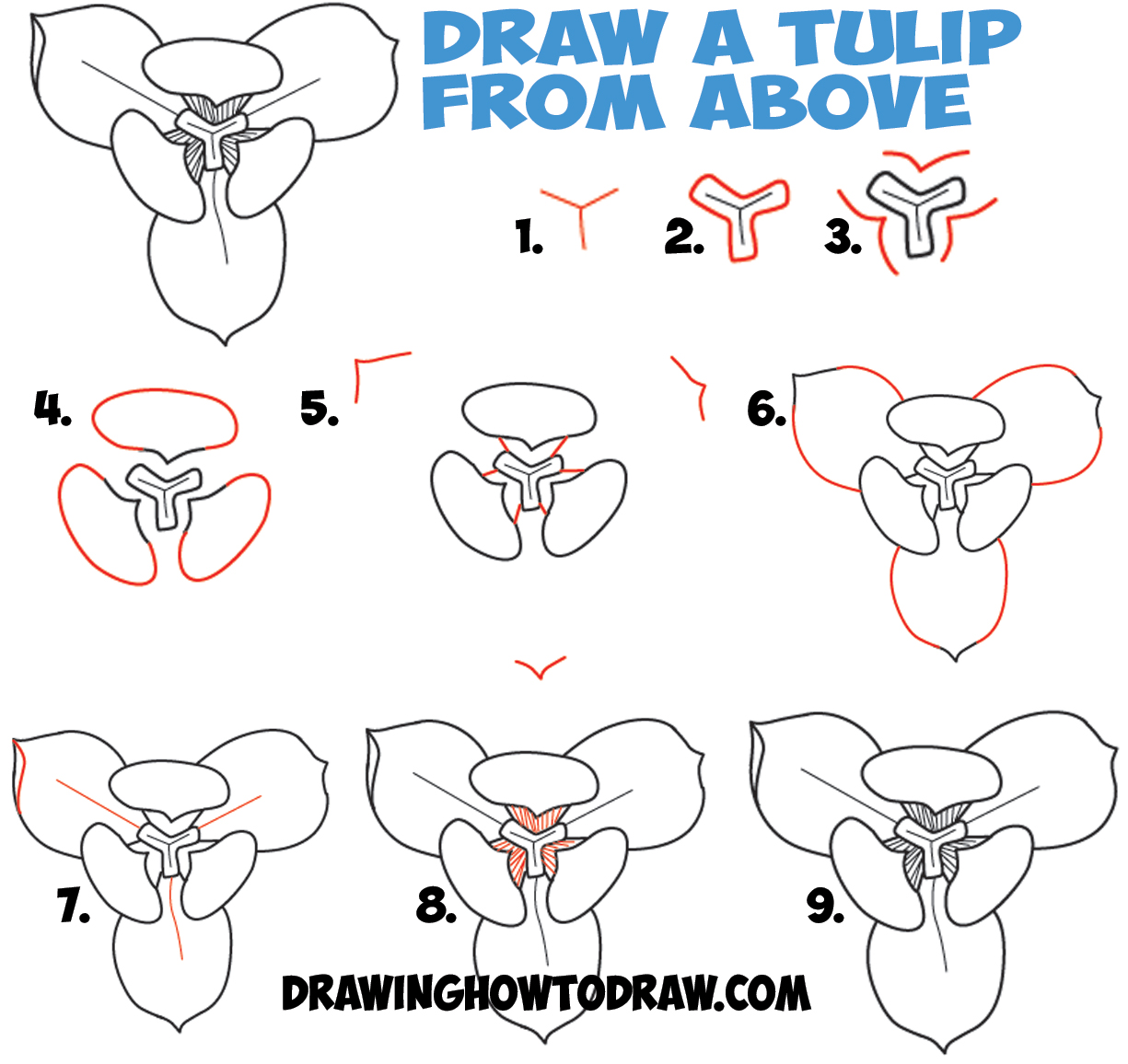 How to Draw Tulips from Above in Aerial View