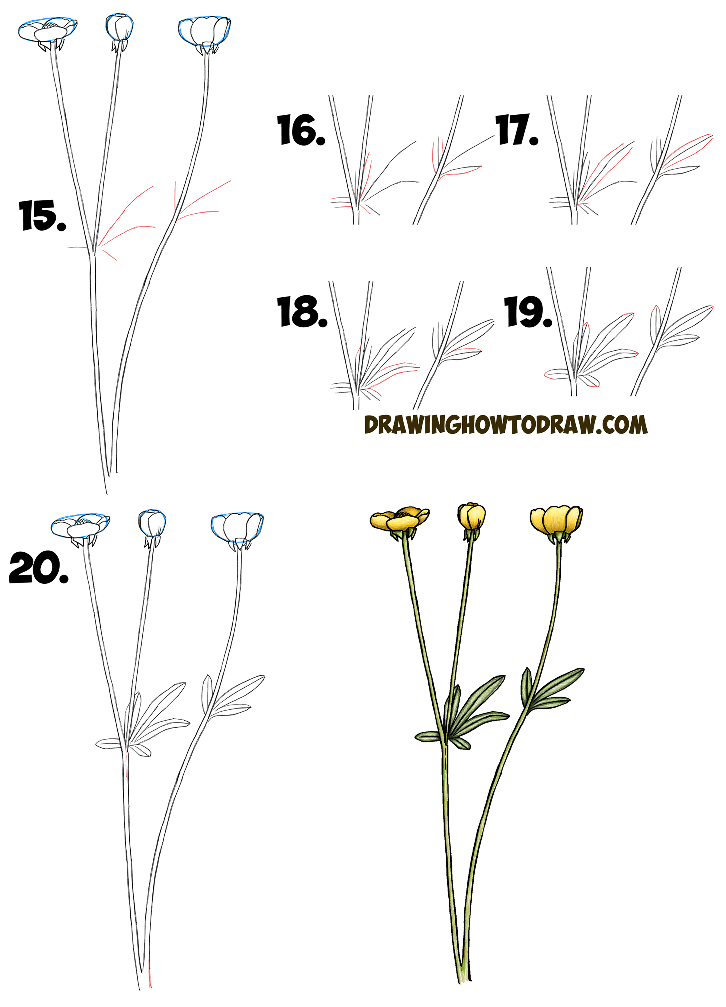 Learn How to Draw a Buttercup Flower Step by Step Drawing Lesson (Buttercups) Simple Steps for Beginners