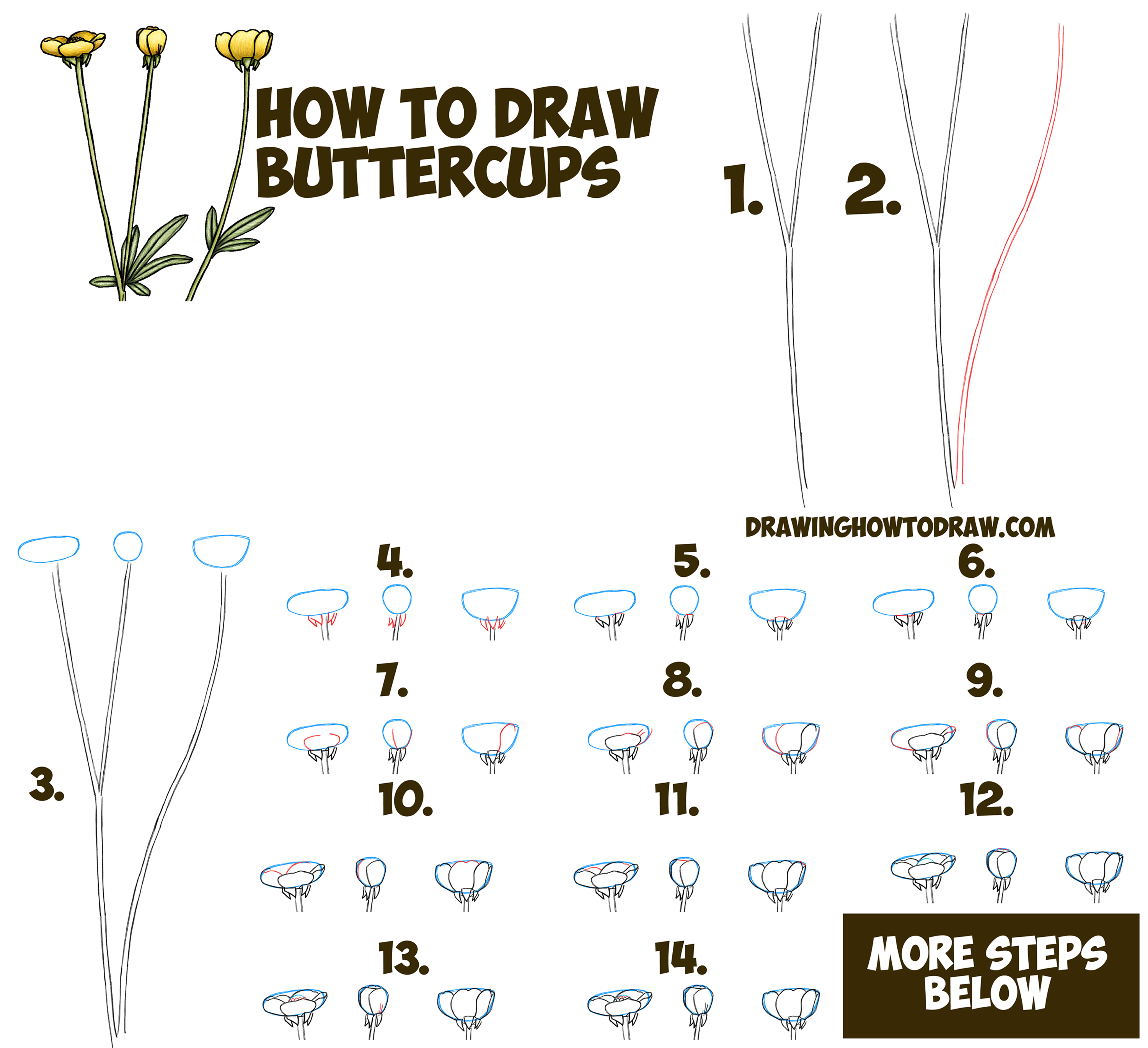 How To Draw A Buttercup Flower Step By Step Drawing Tutorial Buttercups Easy For Beginners How To Draw Step By Step Drawing Tutorials