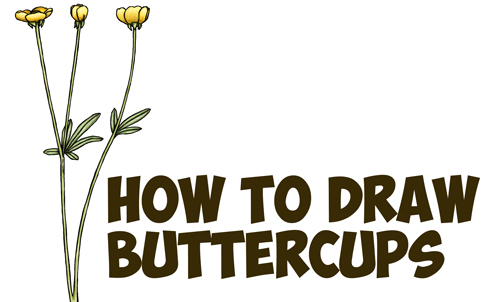 How To Draw Flowers Archives How To Draw Step By Step Drawing